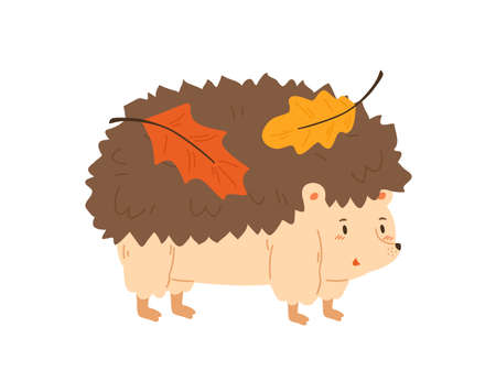 Cute hedgehog carrying autumn colorful leaves vector flat illustration. Funny forest animal with leaf on needle back isolated on white. Adorable childish character standing with fall foliage