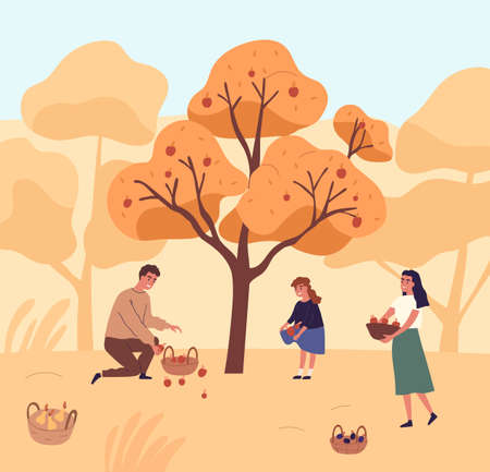 Cute family picking apples in garden vector flat illustration. Happy mother, father and daughter gathering fruits from tree together. People putting organic seasonal growth edible plants in baskets Illustration
