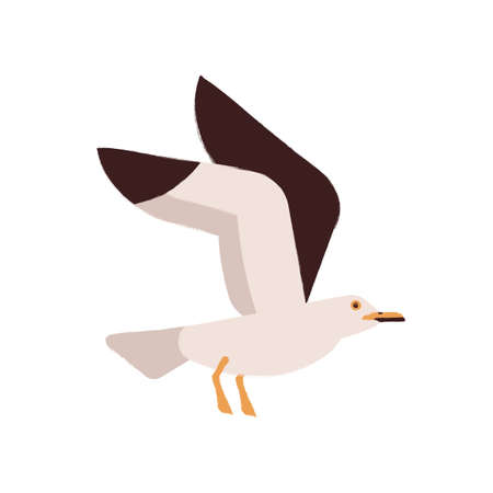 Adorable polar bird flying with raising up wings vector flat illustration. Arctic or atlantic inhabit wild seagull during flight isolated on white. Cute colorful seabird