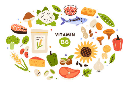 Collection of vitamin B6 food, sources. Nuts, mushrooms, fish and meat, vegetables, eggs, cereals. Dietetic products, organic nutrition. Flat vector cartoon illustration isolated on white background