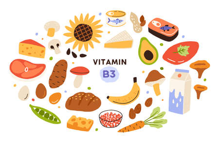 Collection of vitamin B3 sources. Food containing niacin. Banana, mushrooms, nuts, avocado, dairy products, etc. Dietetic nutrition, organic natural products. Flat vector cartoon illustration