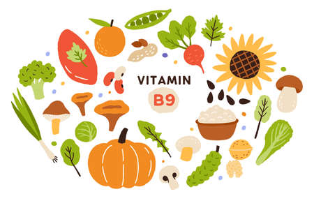 Collection of vitamin B9 sources. Food enriched with folatin. Dairy product, fruits, vegetables and salad greens. Dietetic organic nutrition. Flat vector cartoon illustration isolated on white 矢量图像