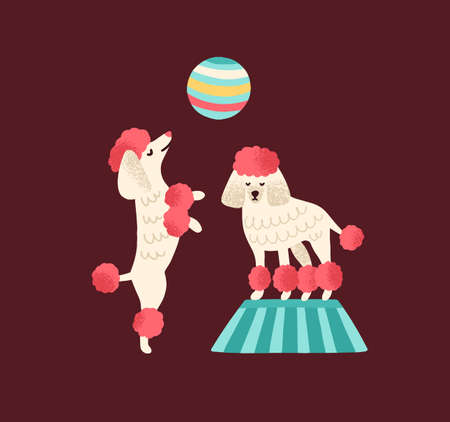 Pair of trained poodles standing and dance on hind legs with ball. Circus performance with cute dogs. Funny cirque animals. Flat vector textured cartoon isolated illustration Vector Illustration