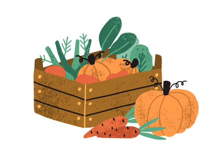 Local organic harvested crops in a wooden box. Autumn vegetables like pumpkin and carrots. Harvest gathering time. Agricultural concept. Textured flat vector illustration isolated on white background