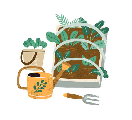Farming and greens cultivation concept. Breeding green plants. Garden tools like water can and weeder near box of growing lettuce and spinach. Flat vector illustration isolated on white background