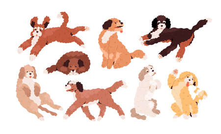 Set of cute playful Goldendoodles and Labradoodles. Golden, tan and white curly-haired dogs running, jumping, sitting and waving with paw. Colored flat vector illustration isolated on white background