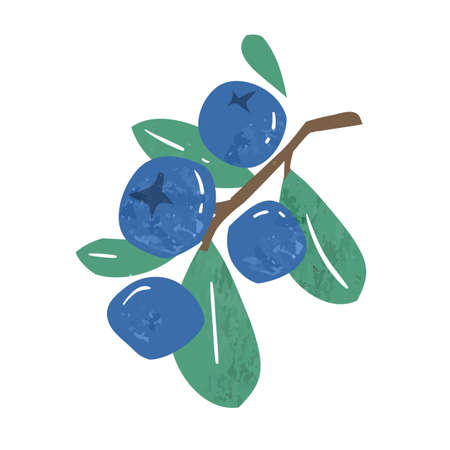 Hand drawn branch of ripe blueberries or bilberries with leaves vector flat illustration. Fresh vitamin blue berries isolated on white background. Seasonal edible plant, juicy fruit