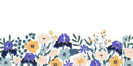 Gorgeous floral backdrop with border of blooming flowers and leaves. Design of horizontal banner with elegant irises and roses isolated on white background. Colorful flat vector illustration