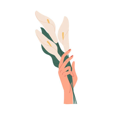 Female hand holding bunch of delicate white flowers isolated on white background. Elegant cut calla bouquet. Beautiful summer gift. Colorful flat vector illustration