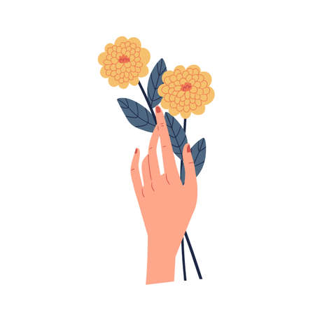 Female hand holding two yellow chrysanthemums isolated on white background. Even number of flowers. Beautiful fall floral plant. Colorful flat vector illustration