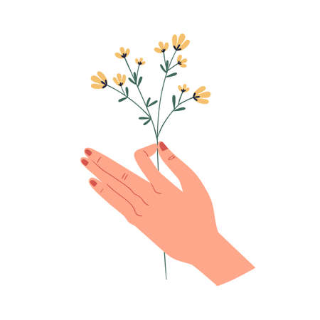 Female hand holding delicate yellow wild flower isolated on white background. Herbal floral plant. Perennial graphic wildflower. Flat vector illustration