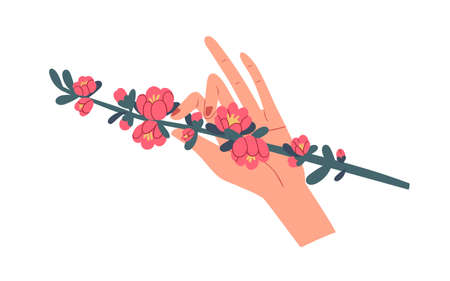 Female hand holding green quince branch with gorgeous blooming pink flowers isolated on white background. Beautiful spring floral plant. Colorful flat vector illustration