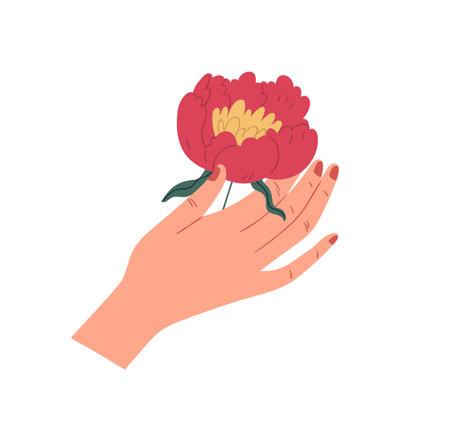 Female hand holding gorgeous japanese peony. Elegant flower with lush red petals isolated on white background. Beautiful summer gift. Colorful flat vector illustration Ilustração