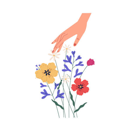 Female hand touching summer bouquet of gorgeous wild or field flowers. Bunch of tender blooming anemones isolated on white background. Colorful flat vector illustration
