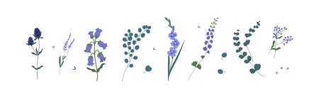 Set of wild and garden flowers and decorative green plants isolated on white background. Collection of floral decorations, lavender, eucalyptus, delphinium and bluebell. Flat vector illustration