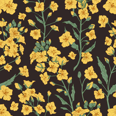 Elegant seamless pattern of rapeseed plant or yellow canola flowers. Botanical design for printing. Endless repeatable floral backdrop on dark background. Hand drawn detailed vector illustration