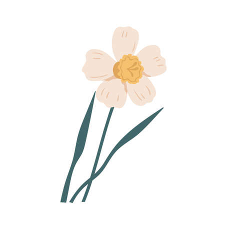 Elegant blossomed daffodil flower with stem and leaves. Delicate blooming narcissus. Gorgeous botanical floral element. Colorful flat vector illustration isolated on white background Vektorgrafik