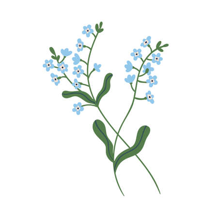 Small blue forget-me-not flowers on stem with leaves. Delicate blooming forgetmenots. Botanical floral element. Colorful flat vector illustration isolated on white background