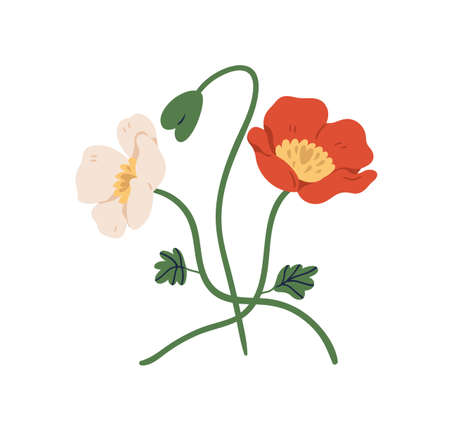 Blossomed and unblown buds of red and white poppy flowers on stems. Elegant floral plants. Colorful flat vector illustration isolated on white background Vektorgrafik