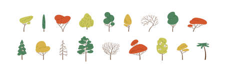 Set of deciduous and evergreen forest plants. Botanical collection of bare trees and ones with leaves and lush yellow, green and orange crowns. Colorful flat vector illustration on white background. Ilustração