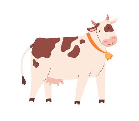 Funny spotty cow with bell on neck. Farm milk animal with udder. Childish flat vector illustration isolated on white background