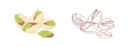 Colored pistachio and unpainted outlined sketch of pistaches. Peeled and unopened nut fruits. Hand-drawn vector illustration isolated on white background