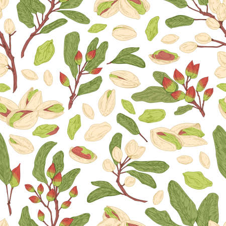 Seamless pistachio pattern with nuts, shells, branches and leaves. Endless texture with realistic pistaches on white background. Hand-drawn colored vector illustration for printing