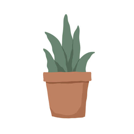 Succulent in pot isolated on white background. Interior plant with fleshy leaves growing in planter. Colored flat vector illustration of houseplant