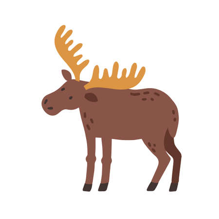Canadian elk with horns. Scandinavian horny moose. Nordic wild animal. Colored flat vector illustration of Swedish fauna isolated on white background Ilustrace