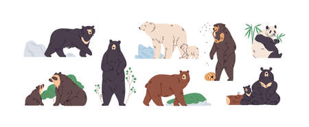 Set of brown, polar, black, Himalayan, Malay, spectacled, honey, sloth bear and panda. Animals in different poses, standing, walking and eating. Colored flat vector illustration isolated on white