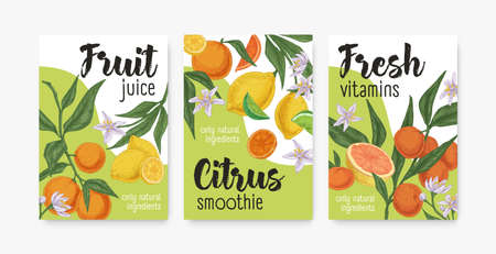 Packaging templates with tropical citrus fruits. Set of lemon, orange, mandarin, tangerine and grapefruit backgrounds or vertical banners. Colored realistic vector illustration of packing design