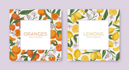 Templates with hand-drawn tropical citrus frames and white backgrounds. Square card design with lemon and orange fruits on borders. Colored realistic vector illustration for cosmetic packaging