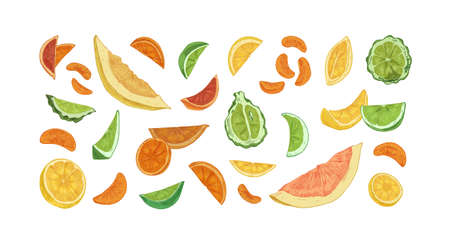 Set of different citrus fruits isolated on white background. Hand-drawn slices, segments and pieces of orange, lemon, bergamot, lime, grapefruit, pomelo and tangerine. Colored vector illustration Stock Illustratie