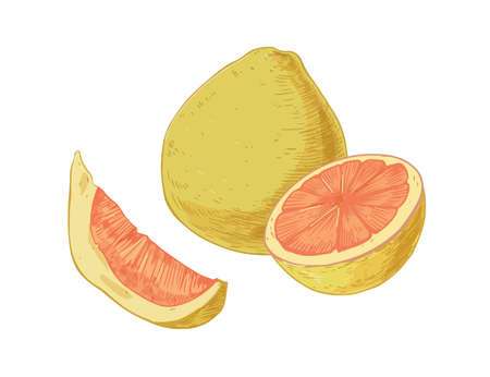 Whole fruit, slice, segment and half of pomelo isolated on white background. Composition of juicy pummelo pieces. Realistic hand-drawn vector illustration of tropical citrus in retro style Stock Illustratie