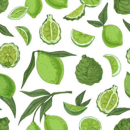 Seamless pattern with tropical limes and bergamots on white background. Endless repeatable texture with realistic green citrus fruits. Hand-drawn colored vector illustration for printing