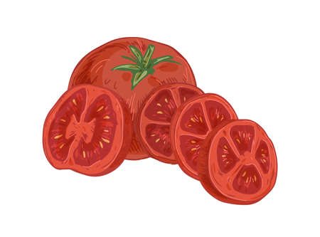 Whole ripe fruit, half and slices of sweet red tomato with peduncle. Composition with fresh organic vegetables. Colored hand-drawn vector illustration of ripened veggies isolated on white background.