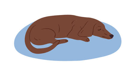 Cute brown Dachshund or sausage dog sleeping on rug. Cute purebred short-legged doggy. Colored flat vector illustration of sweet sleepy puppy isolated on white background