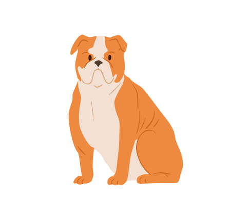 Portrait of angry English bulldog with wrinkled face. Serious British purebred bull dog with short hair and folded skin. Muscular doggy. Colored flat vector illustration isolated on white background