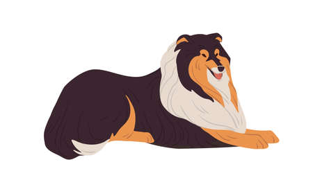 Hairy Collie dog resting. English doggy breed with long coat. Happy friendly purebred doggie. Colored flat vector illustration isolated on white background