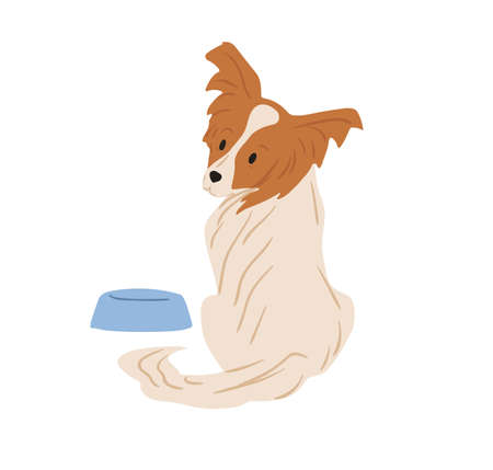 Papillon dog with hairy butterfly-like ears. Continental toy spaniel sitting near feeder and asking for food. Purebred doggy. Colored flat vector illustration isolated on white background Ilustrace