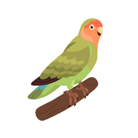 Rosy-collared peach-faced lovebird. Small African parrot with green folded wings. Tropical bird sitting on branch. Realistic flat cartoon vector illustration isolated on white background Vector Illustratie