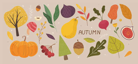 Autumn Vibes Concept. Set of trendy hand drawn autumn objects, fruits, vegetables, leaves. All elements are isolated and well drawn. Autumn mood. Colorful Cartoon Flat Vector Illustration