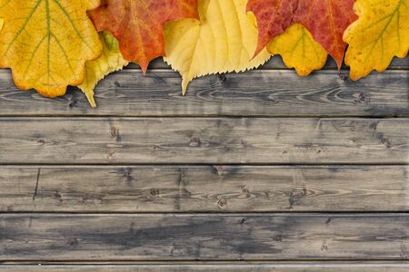 background with autumn leaves on the rural wood planks photo