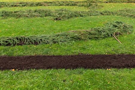 flowerbeds: protection procedure flowerbeds with spruce fir twigs