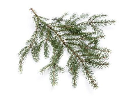 branche sapin noel: Branche d'arbre de No�l isol� sur fond blanc