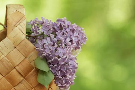 birchbark: lilac flowers in birchbark basket, defocused background Stock Photo
