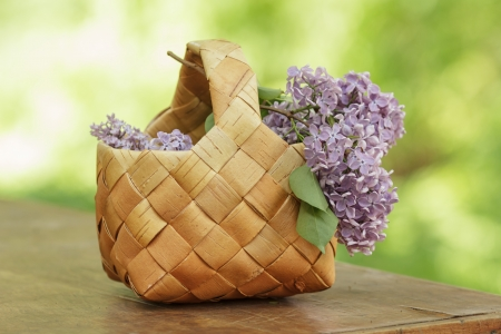 lilac flowers in birchbark basket on table, defocused background Stock Photo - 20079491