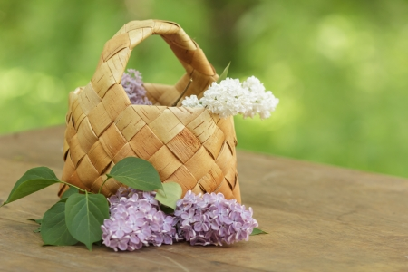 lilac flowers in birchbark basket on table, defocused background photo