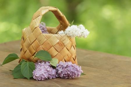 birchbark: lilac flowers in birchbark basket on table, defocused background Stock Photo