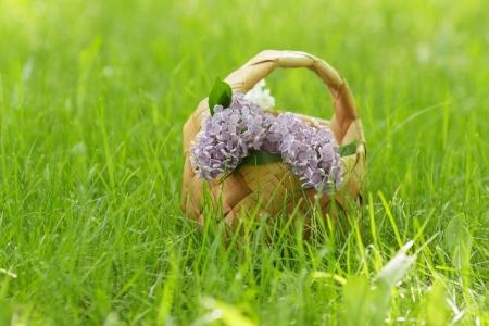 birchbark: lilac flowers in birchbark basket on grass, selective focus